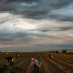 Opinion | Legalize 'Essential' Coronavirus Workers