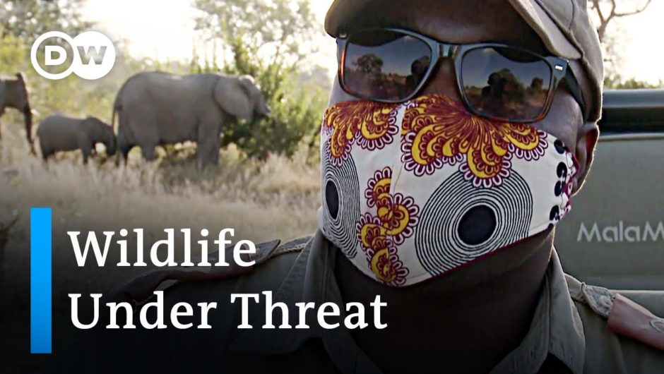 South Africa's wildlife reserves under threat | Global Ideas
