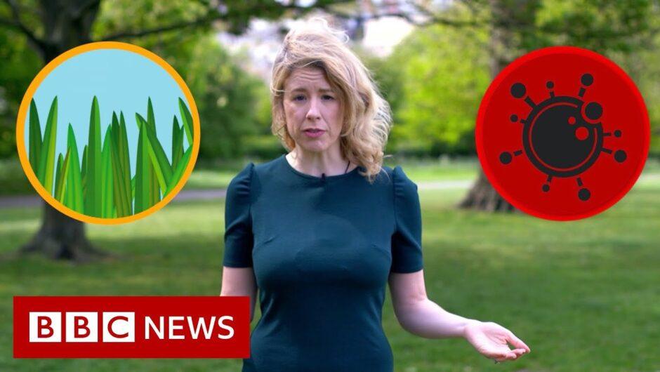 Hay fever or coronavirus: The symptoms compared – BBC News