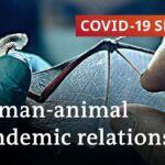 How COVID-19 impacts human-animal coexistence   COVID-19 Special