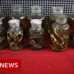 Covid-19: China's dilemma over wild meat trade – BBC News
