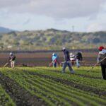 Despite coronavirus impact, U.S. Mexican workers send big amounts of money back home