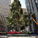 About That Maligned Christmas Tree (and That Owl) at Rockefeller Center