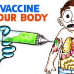 What The Coronavirus Vaccine Does To Your Body