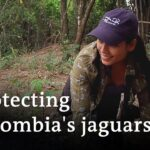Jaguars in Colombia need protection | Global Ideas
