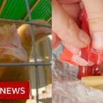 What chicken, ketchup and chlorine have in common –  BBC News